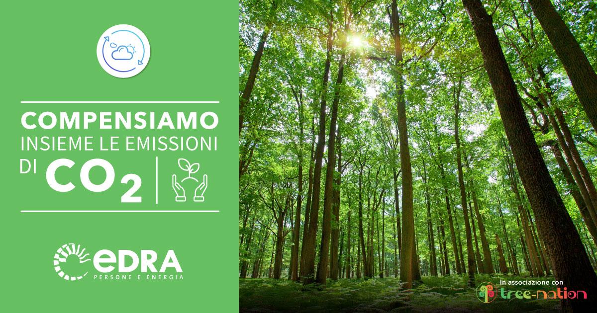 Progetto Tree Nation